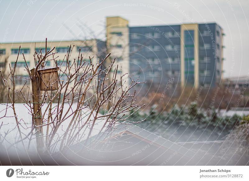 Vogelhaus in kahlem Baum im Winter Weihnachten & Advent weiß Landschaft Haus Hintergrundbild Schnee Garten Schneefall Schneeflocke Futterhäuschen Flocke