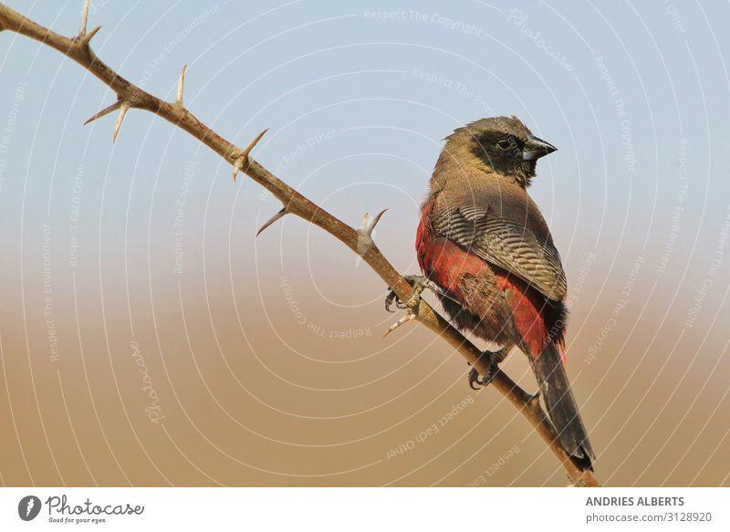 Ferien & Urlaub & Reisen Natur blau schön rot Sonne Tier ruhig schwarz Herbst Umwelt Tourismus Vogel Ausflug elegant Wildtier