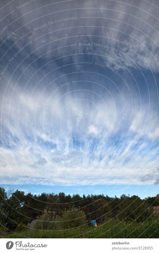 Himmel und Wolken Himmel (Jenseits) Schrebergarten Kleingartenkolonie Menschenleer Natur Sommer Textfreiraum Tiefenschärfe Wind Wetter Meteorologie Cirrus