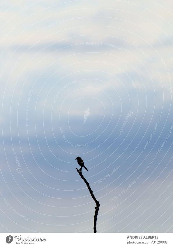 Vereinfachte Natur - Einsamer Vogel Ferien & Urlaub & Reisen Tourismus Abenteuer Freiheit Sightseeing Safari Sommer Sommerurlaub Umwelt Tier Luft Himmel