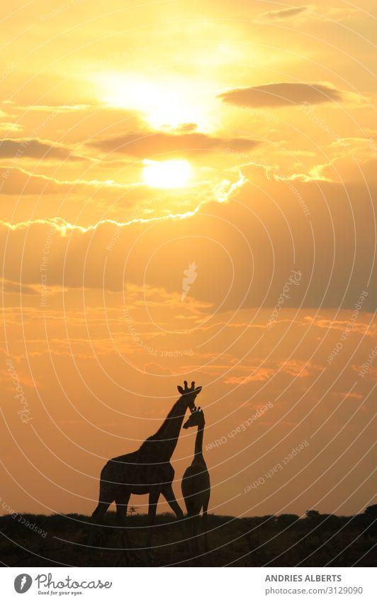 Himmel Ferien & Urlaub & Reisen Natur Sommer Landschaft Sonne Tier schwarz gelb Umwelt Tourismus Freiheit orange Ausflug gold Erde