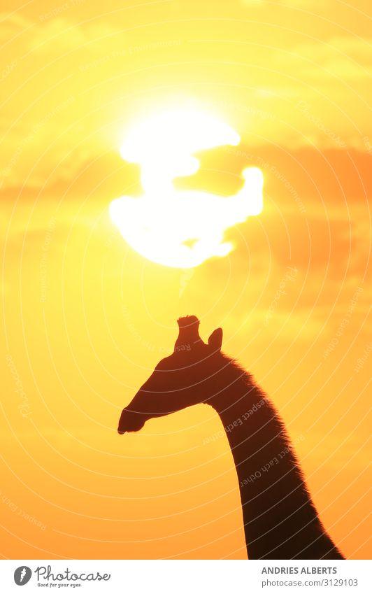 Himmel Ferien & Urlaub & Reisen Natur Sommer schön Sonne Tier ruhig schwarz gelb Umwelt Tourismus Freiheit Ausflug gold Wildtier