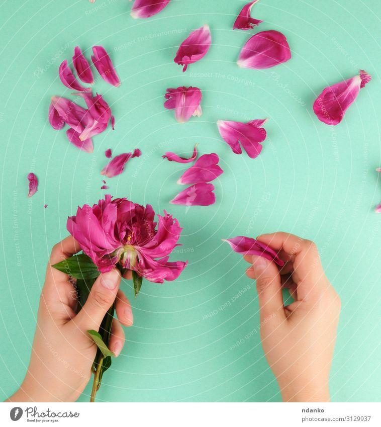zwei Hände eines jungen Mädchens mit glatter Haut elegant schön Körper Maniküre Kosmetik Behandlung Spa Sommer Feste & Feiern Hochzeit Geburtstag Frau