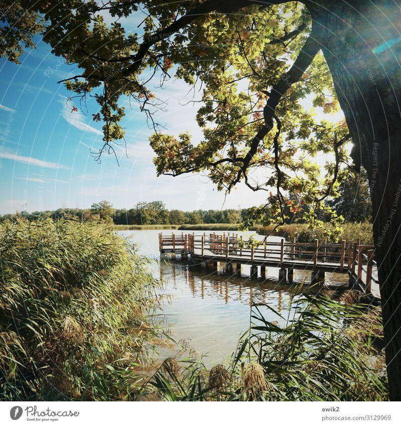 Lehrgang Umwelt Natur Landschaft Pflanze Luft Wasser Himmel Wolken Horizont Herbst Schönes Wetter Baum Sträucher Röhricht Zweige u. Äste Eiche Seeufer Teich