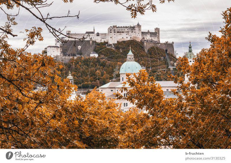Festung Hohensalzburg Ferien & Urlaub & Reisen Sightseeing Städtereise Natur Wolken Herbst Pflanze Sträucher Hügel Stadt Kirche Dom Burg oder Schloss Dach