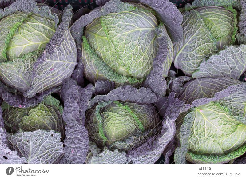 Kohlernte Lebensmittel Gemüse Wirsing Ernährung Mittagessen Abendessen Bioprodukte Vegetarische Ernährung Natur Pflanze Nutzpflanze blau gelb grün violett Noppe