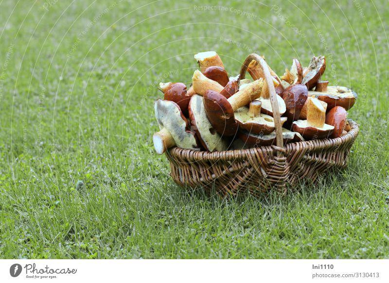 Maronenröhrling, reiche Beute Lebensmittel Pilz Mittagessen Abendessen Bioprodukte Vegetarische Ernährung Ausflug Essen Natur Pflanze Herbst Gras Wald braun