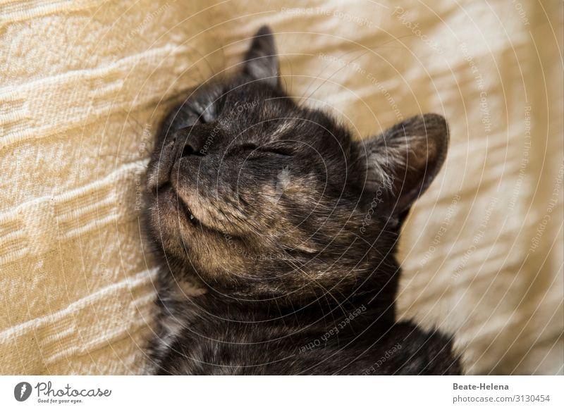 Süße Träume Zufriedenheit Erholung ruhig Bett Zähne Fell Schnurrhaar Haustier Katze Tiergesicht genießen Lächeln schlafen träumen ästhetisch Freundlichkeit