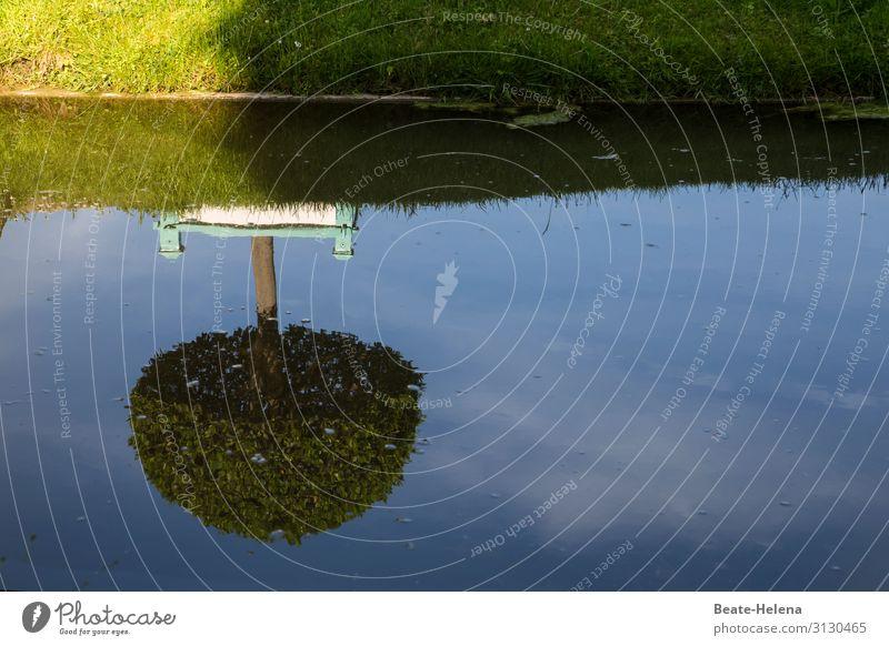 Baum gespiegelt im sommerlich sonnenbeschienenen Wasser Spiegelbild Sommer Reflexion & Spiegelung See Landschaft Seeufer Abkühlung Sonnenschein Schönes Wetter