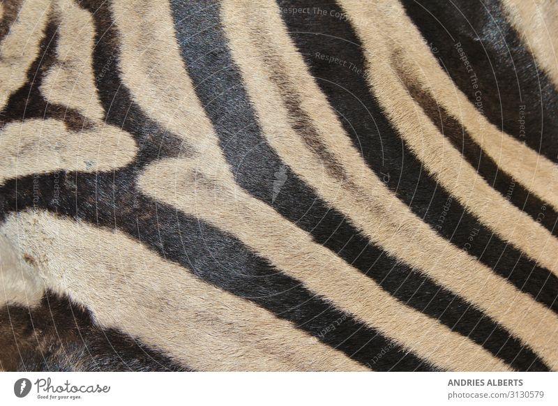 Ferien & Urlaub & Reisen Natur Farbe schön weiß Tier schwarz Kunst Tourismus grau Wildtier Kreativität Abenteuer authentisch einfach Bildung