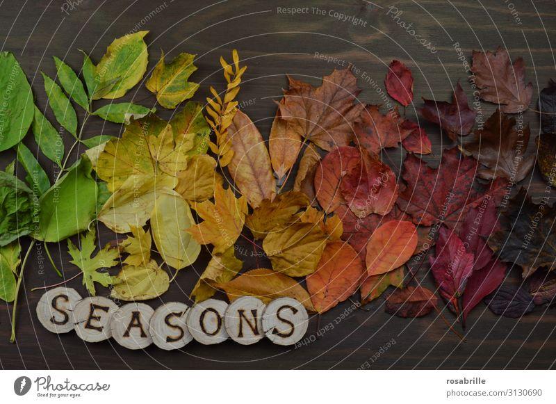 Wandel der Jahreszeiten Erntedankfest Umwelt Natur Herbst Blatt fallen leuchten braun gelb grün orange rot unbeständig Vergänglichkeit Wandel & Veränderung