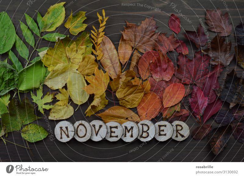 Kalenderblatt November Umwelt Natur Herbst Blatt Holz fallen leuchten braun gelb grün orange rot Tod Einsamkeit unbeständig Vergänglichkeit Wandel & Veränderung