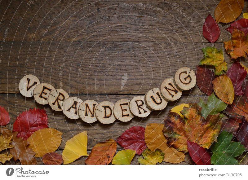 VERÄNDERUNG Natur grün rot Blatt Holz Herbst gelb Umwelt natürlich orange braun Beginn Vergänglichkeit Klima Wandel & Veränderung Buchstaben