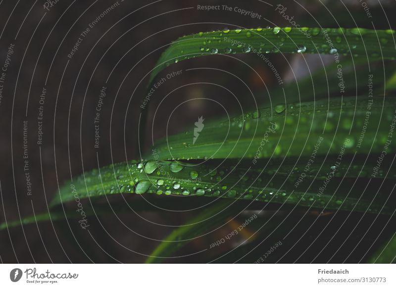 Blätter im Regen Natur Pflanze Wassertropfen Blatt Grünpflanze Garten frisch nass grün Wachstum Farbfoto Gedeckte Farben Außenaufnahme Menschenleer