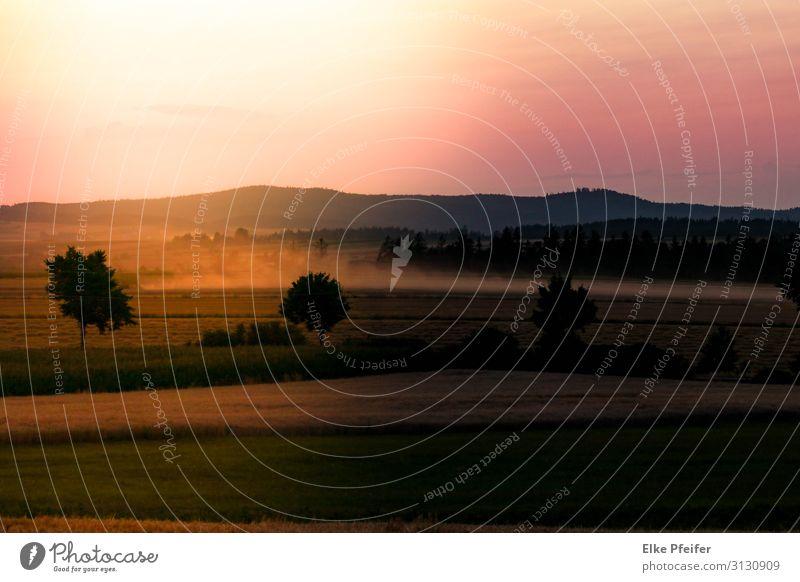 Im Waldviertel Natur Landschaft Sonnenaufgang Sonnenuntergang Feld Österreich Europa natürlich schön Wärme Stimmung Freiheit Frieden Gelassenheit Farbfoto