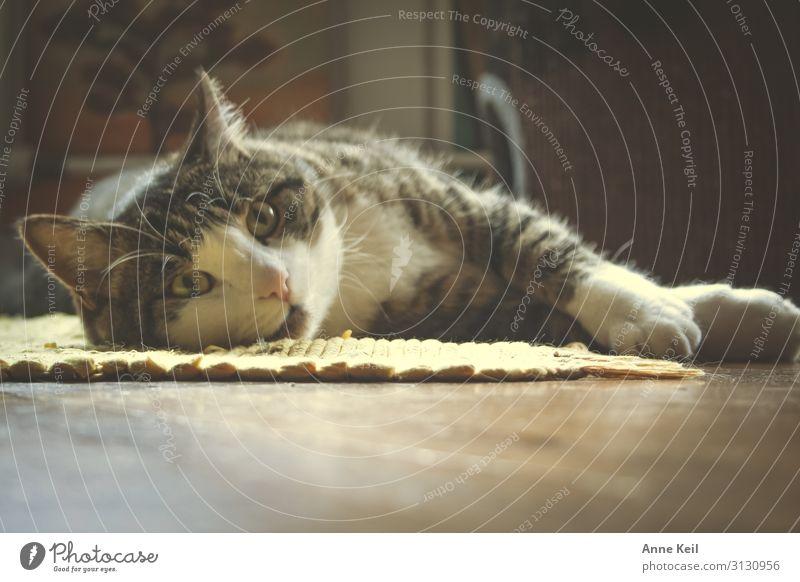 Kater liegend Katze weiß Erholung Tier schwarz Wärme Liebe natürlich Gefühle braun Zufriedenheit wild träumen gold elegant ästhetisch