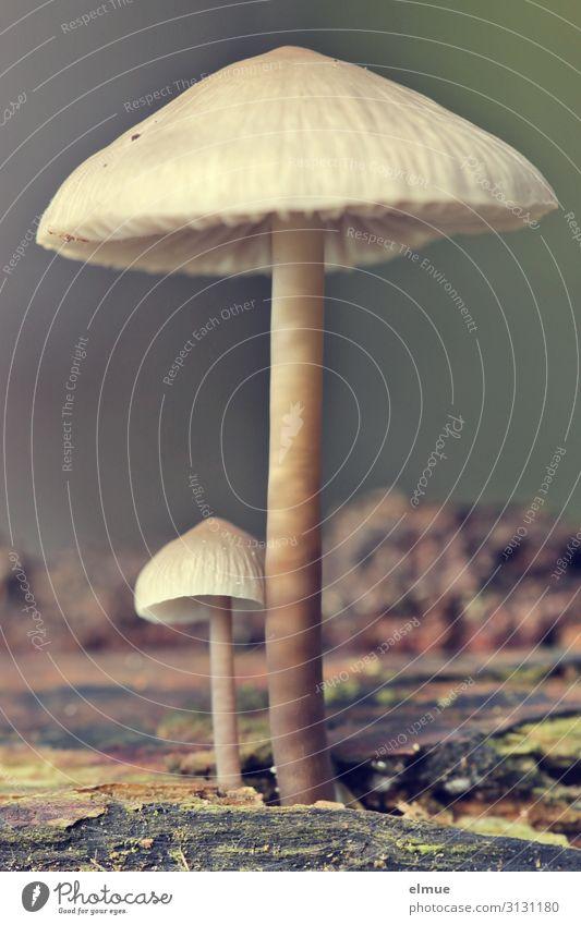 mach dich nicht so dick! Natur Pflanze Herbst Pilz Pilzhut Pilzkopf Wald Wachstum dünn Zusammensein klein Willensstärke Mut Romantik standhaft Neid Hochmut
