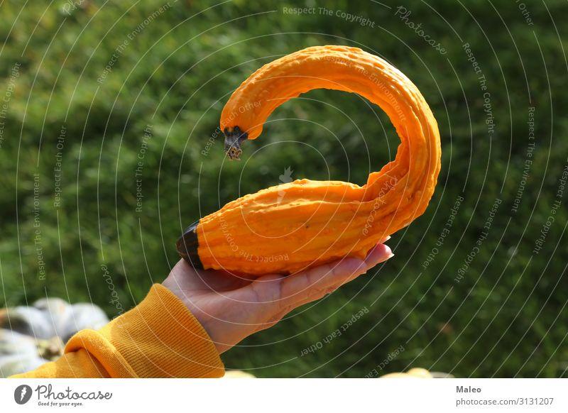 Gelber dekorativer Kürbis in Form eines Vogels Herbst Dekoration & Verzierung Bauernhof Natur orange Jahreszeiten Freude Oktober frisch Halloween gelb Schwan