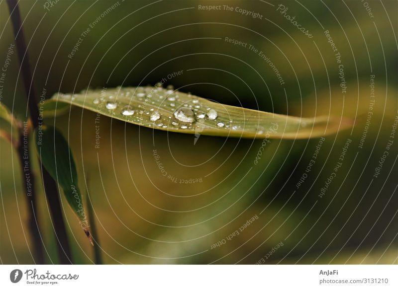 Dröppche Natur Pflanze Wasser Wassertropfen Herbst Wetter Regen Sträucher Blatt Grünpflanze Stimmung Trauer Vergänglichkeit verlieren Farbfoto Gedeckte Farben