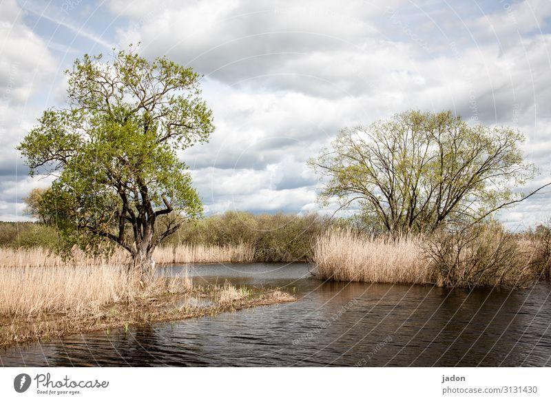 mehr wasser. Umwelt Natur Landschaft Pflanze Wasser Wolken Frühling Klimawandel Baum Fluss bedrohlich nass Wandel & Veränderung Schilfrohr Hochwasser Farbfoto