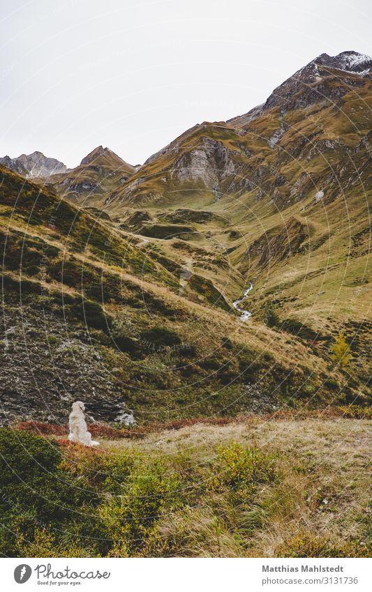 Hund in den Bergen Ferien & Urlaub & Reisen Tourismus Abenteuer Berge u. Gebirge wandern Umwelt Natur Landschaft Herbst Schneebedeckte Gipfel Dolomiten Tier
