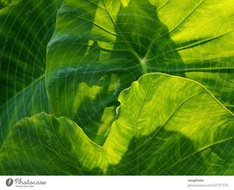 Natur Sommer Pflanze Farbe schön grün Blatt Wald Frühling natürlich Garten Dekoration & Verzierung frisch Wachstum Sträucher Klettern