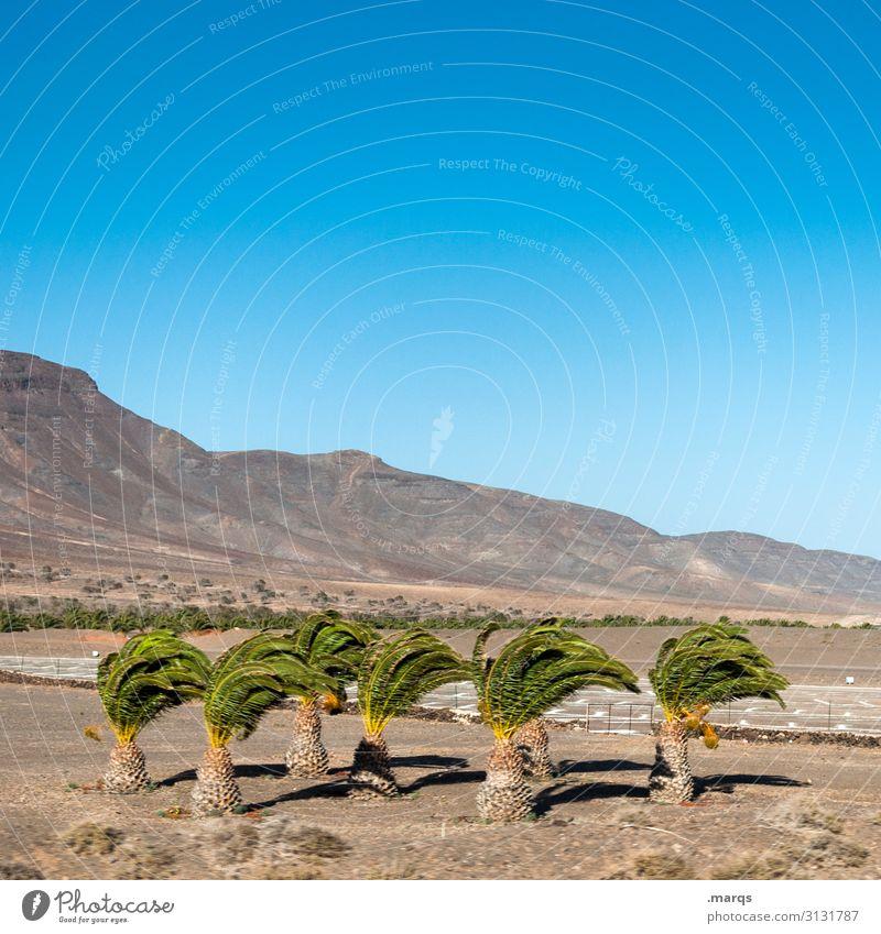 Sturmfrisur Ferien & Urlaub & Reisen Ferne Natur Landschaft Schönes Wetter Menschenleer Freiheit Abenteuer Ausflug Tourismus Sommer Himmel Hügel Spanien heiß