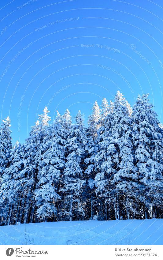 Winterwald Ferien & Urlaub & Reisen Tourismus Winterurlaub Berge u. Gebirge wandern Umwelt Natur Landschaft Pflanze Himmel Wolkenloser Himmel Schönes Wetter Eis