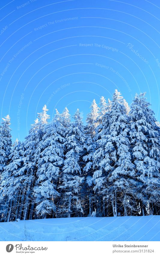 Winterwald Himmel Ferien & Urlaub & Reisen Natur Pflanze blau weiß Landschaft Baum Wald Berge u. Gebirge dunkel Umwelt kalt natürlich Schnee