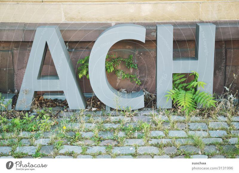 ach (soooooo) Buchstaben Großbuchstabe Wort Kapitälchen groß ACH Ausruf Wand Außenaufnahme Kopfsteinpflaster Pflanze Grünpflanze bewachsen Unkraut Stadtleben