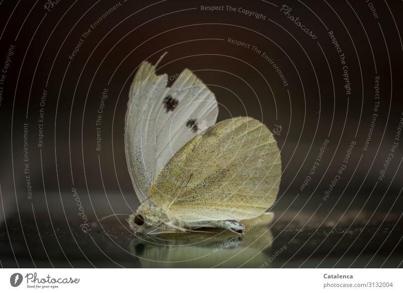 Verloren | das Leben Schmetterling Insekt 1 Tier liegen weich gelb grau grün schwarz Traurigkeit Trauer Tod ruhig Vergänglichkeit Wandel & Veränderung Zeit