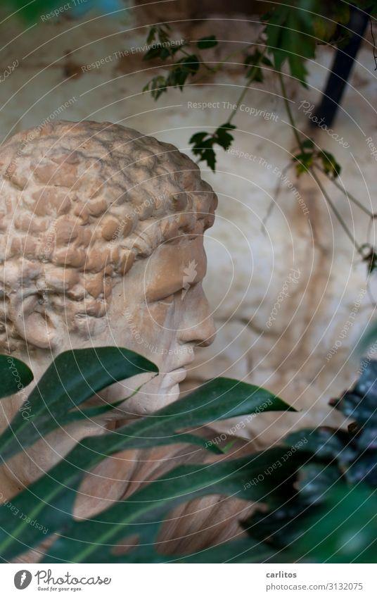 Lockenköpfchen Mann Kopf Romantik Statue verstecken Mallorca Hinterhof klassisch Terrakotta