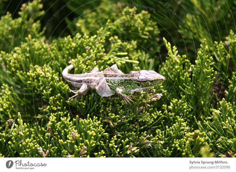 Häutung Natur grün Tier Leben Umwelt natürlich außergewöhnlich Wachstum Wildtier Kraft Beginn Wandel & Veränderung Neugier Sauberkeit Hoffnung Wellness