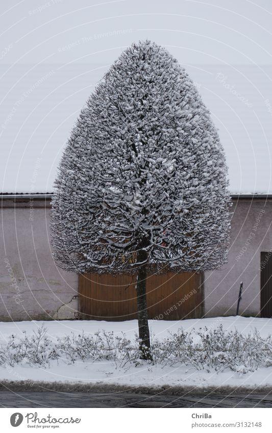 Winter im Dorf Natur Landschaft Pflanze Klima Wetter Eis Frost Schnee Schneefall Baum Park Kleinstadt Menschenleer Gebäude Tor Straße Wege & Pfade ästhetisch