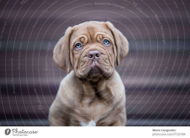 Puppylove Tier Haustier Hund 1 Tierjunges niedlich Welpe Farbfoto Gedeckte Farben Außenaufnahme Textfreiraum links Textfreiraum rechts Tag