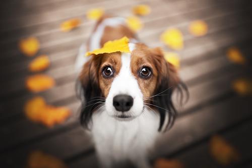 Autumnlove Natur Hund Tier Blatt Herbst Schönes Wetter Warmherzigkeit Haustier