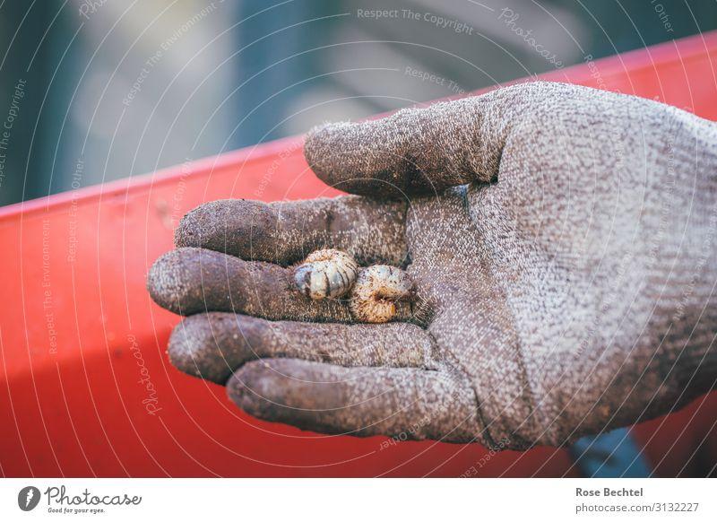 Fingerspitzengefühl - zwei Rosenkäferengerlinge Natur rot Hand Tier natürlich klein Garten braun dreckig entdecken Schutz zeigen nachhaltig Gartenarbeit