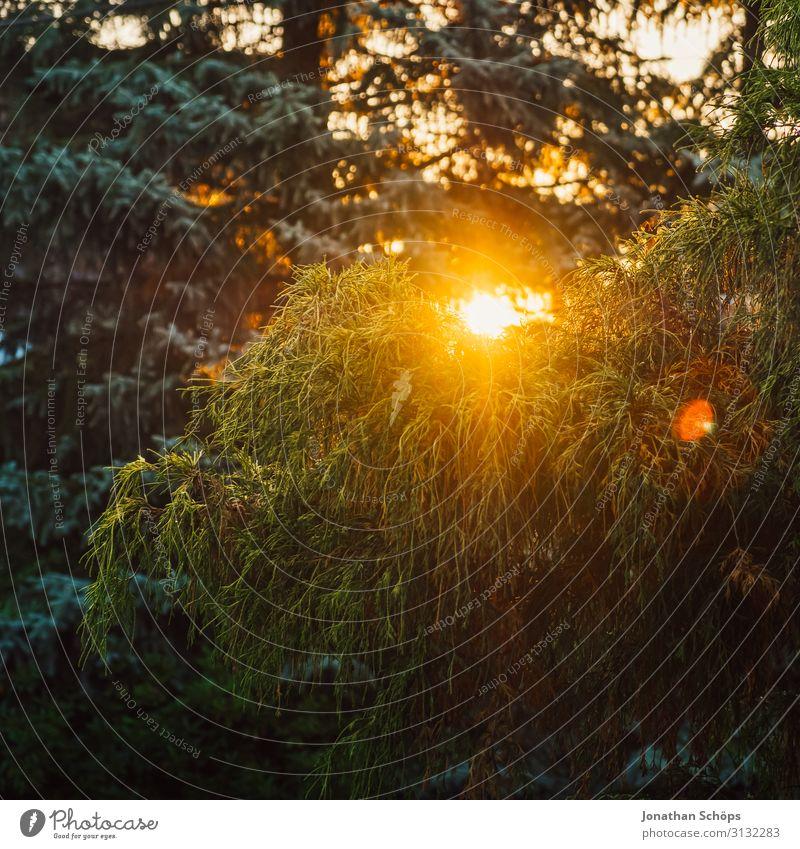 grüner Baum bei Sonnenuntergang und warmem Licht Herbst Park Hintergrundbild schön hell mehrfarbig Textfreiraum unten Textfreiraum links Wald Garten Landschaft