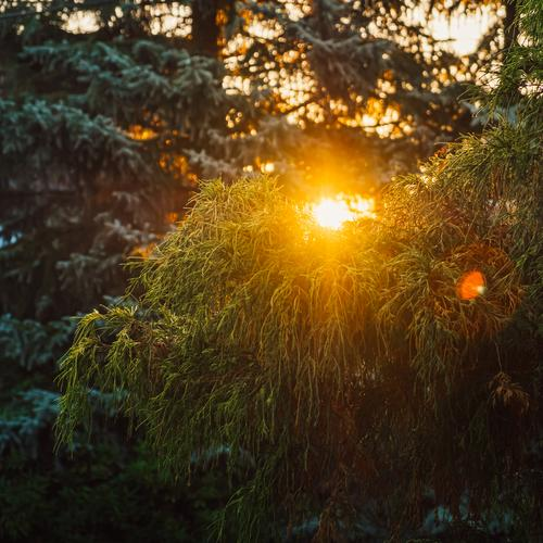 grüner Baum bei Sonnenuntergang und warmem Licht Natur Sommer schön Landschaft Wald Hintergrundbild Herbst gelb natürlich Garten hell Park malerisch