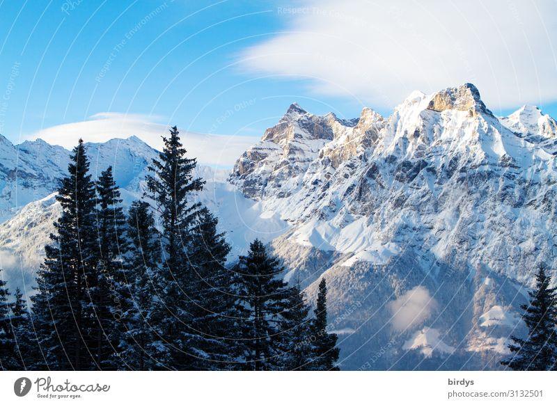 Alpenwelt Natur Landschaft Himmel Wolken Winter Klimawandel Schönes Wetter Baum Tanne Berge u. Gebirge Gipfel Schneebedeckte Gipfel authentisch hoch kalt