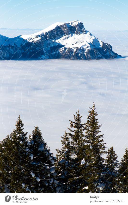 über den Wolken... Ferien & Urlaub & Reisen Schnee Winterurlaub Berge u. Gebirge Natur Wolkenloser Himmel Klimawandel Schönes Wetter Tanne Alpen Gipfel