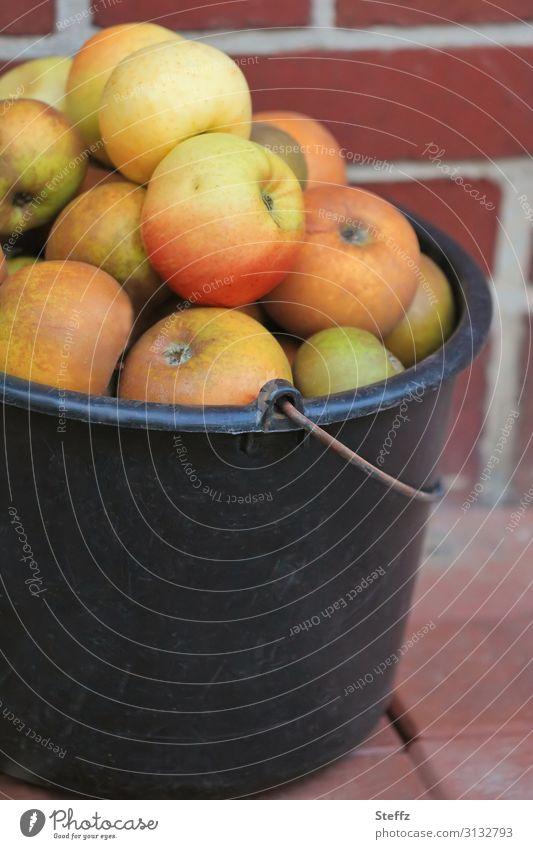 Apfelernte Lebensmittel Frucht Ernährung Bioprodukte Vegetarische Ernährung Vegane Ernährung Umwelt Natur Herbst Garten Obstgarten einfach frisch Gesundheit
