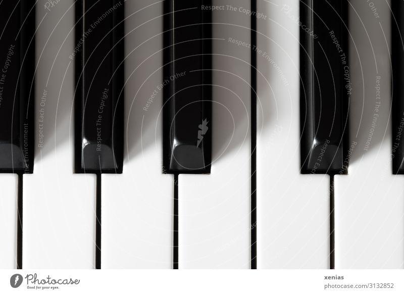 Fingerspitzengefühl / Klaviertasten Klaviatur hören Spielen schwarz Musik weiß Leidenschaft Sinnesorgane Intuition Studioaufnahme Detailaufnahme Menschenleer