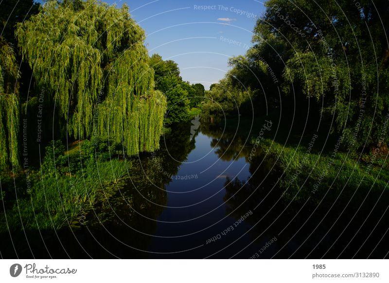 Flussspiegelung Natur Landschaft Wasser Wolkenloser Himmel Sommer Schönes Wetter Baum Flussufer außergewöhnlich blau grün Gelassenheit ruhig Leben Hoffnung