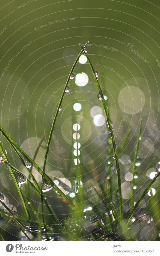 eingang Pflanze Wassertropfen Schönes Wetter Gras Wiese Flüssigkeit frisch hell nass natürlich Natur Farbfoto Außenaufnahme Nahaufnahme Menschenleer
