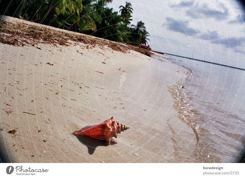 Muschel vom palmilla strand Wasser Strand Sand Kuba