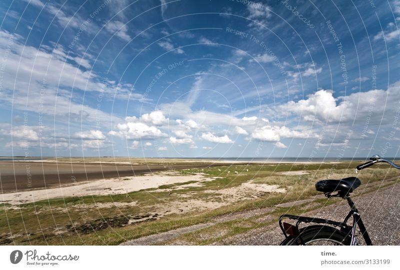 crossing the isle Umwelt Natur Landschaft Himmel Wolken Horizont Schönes Wetter Wiese Küste Sylt Verkehr Fahrradfahren Wege & Pfade Schaf Gefühle Lebensfreude