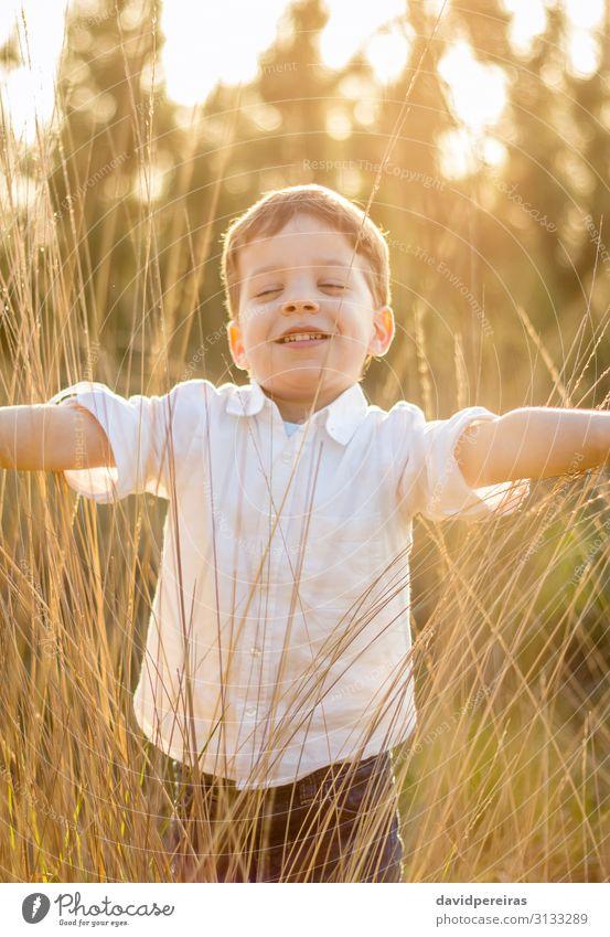 Kind im Feld spielt mit Spitzen bei Sonnenuntergang im Sommer. Lifestyle Freude Glück schön Leben Freizeit & Hobby Spielen Freiheit Mensch Junge Kindheit Natur