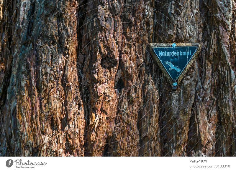 Naturdenkmalplakette an einem Mammutbaum Baum exotisch Sequoiadendron giganteum Baumrinde Strukturen & Formen Schilder & Markierungen alt natürlich braun