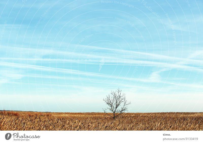 Heimatfilm (IV) Landwirtschaft Forstwirtschaft Umwelt Natur Landschaft Himmel Wolken Horizont Schönes Wetter Pflanze Baum Nutzpflanze Feld hell geduldig ruhig